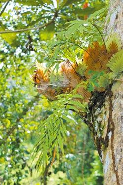 該如何為綠命名(上)──漫步樹冠層,在升旗山棲息地