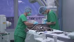 從動物試驗到人體醫療  開發創新精準療法