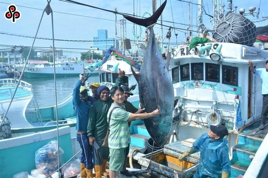 圖為屏東縣過去黑鮪魚季捕獲第一鮪的情況。(本報資料照)