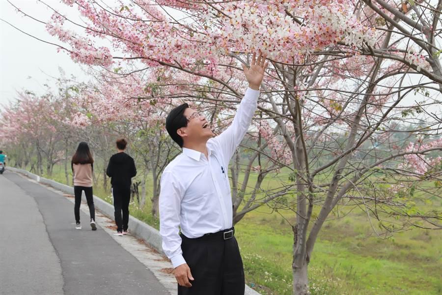 華醫湖(仁德滯洪池)湖畔種滿近百株花旗木,近來也紛紛綻放美麗花朵,美不勝收。(曹婷婷攝)