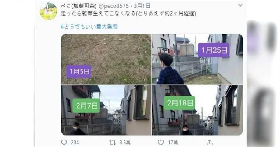 一名日本網友的兒子用3年的時間,想出免農藥的除草方式,果真成功消滅雜草。(圖/翻攝自推特,下同)