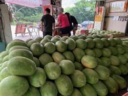 西瓜上市也防疫 西螺「西瓜大王」今年不賣西瓜切盤