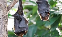 看過蝙蝠尿尿?畫面太衝擊網驚呆