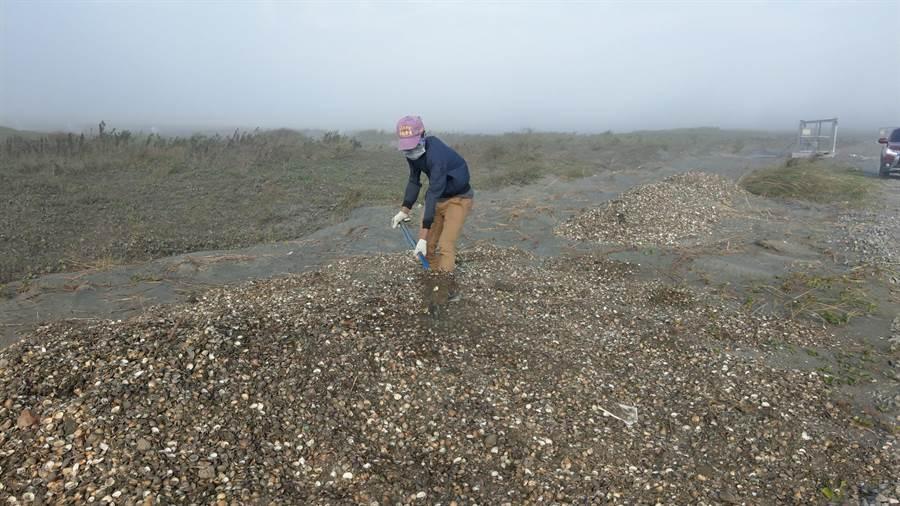 雲林縣政府利用廢棄文蛤殼鋪設濁水溪砂地,有效減少揚塵。(雲林縣環保局提供/張朝欣雲林傳真)