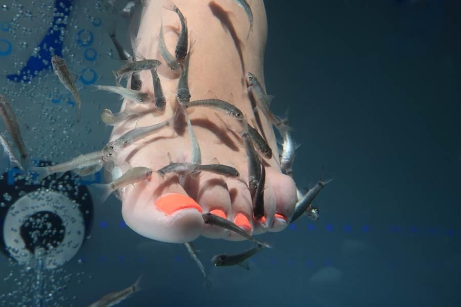溫泉魚會傳染香港腳?網神解答(示意圖/達志影像)