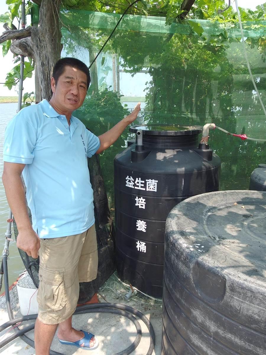 雲林縣台西鄉李宗燦以益生菌養殖文蛤,品質優異宅配大受歡迎。(張朝欣攝)