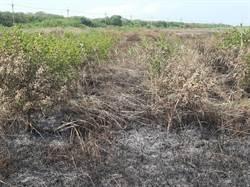 隨機縱火處處燒作物引農民恐慌