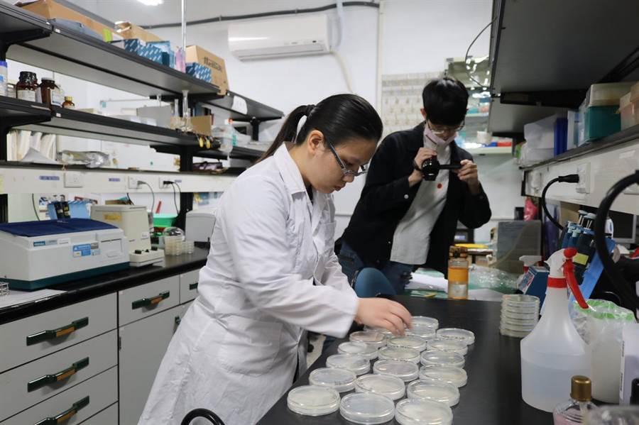 東吳大學校園記者和微生物學系聯手實測後發現,藏菌量最大的地方是鍵盤上的Enter鍵。(東吳大學提供/李侑珊台北傳真)