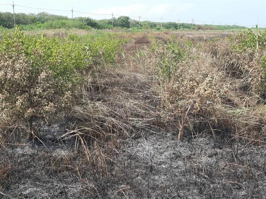 雲林沿海發生多起農地火警,農作被燒毀,農民懷疑是有人蓄意放火。(農民提供/許素惠雲林傳真)