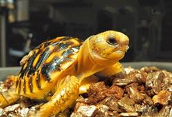 動物園神補殼 壞蛋生育率提高50%