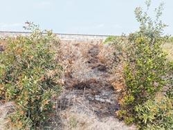 造林農田火災頻傳 原因不單純