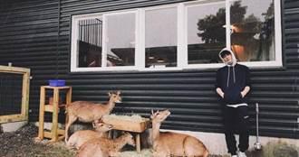 小鮮肉男星張洛偍登山成癮 闖「台版小奈良」體驗鹿群圍堵滋味