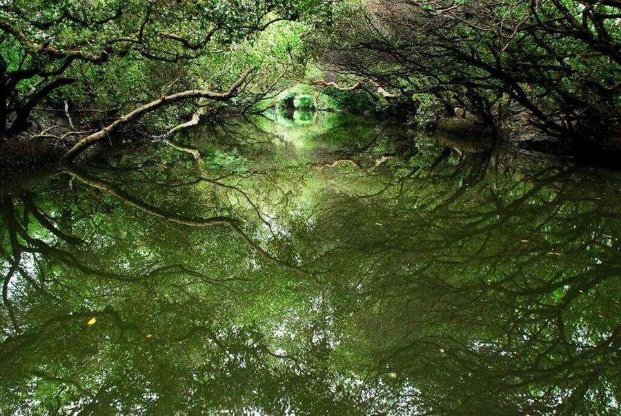 四草綠隧。(圖取台南旅遊網)