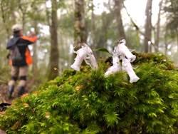 深山特遣隊 巧遇山中精靈「水晶蘭」