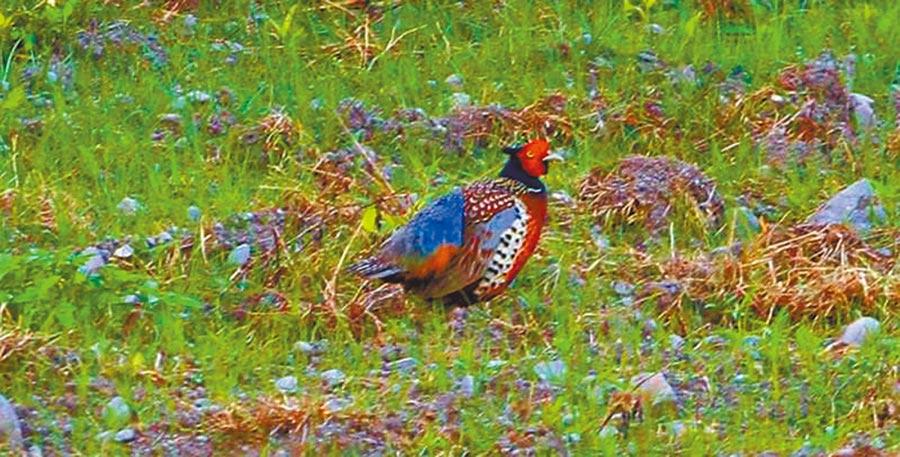 荒野保护协会台东分会恳请能保留知本溼地最后一块生态区。(杨汉声摄)