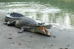慘遭鱷魚咬死! 封城禁足男偷溜垂釣遇劫難