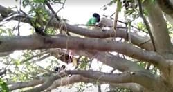 自主隔離沒房間 7工人睡「樹上」