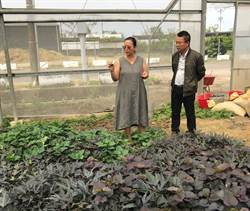 護理師轉職當農夫 打造香草新樂園
