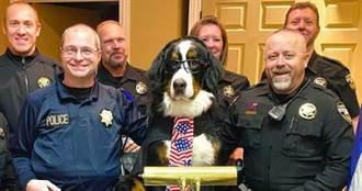 狗狗榮譽市長 上任沒多久就出現政治危機?