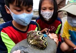 移植硨磲貝 富山保護區打造海中玫瑰花園