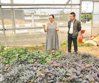 護理師改當農夫 打造香草園