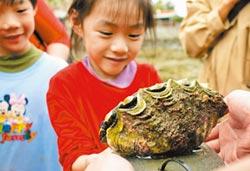 移植硨磲貝 富山闢海中玫瑰園