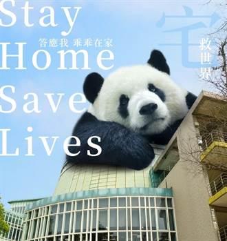愚人節開懷一下!「巨大」貓熊出沒動物園 籲防疫要乖乖在家