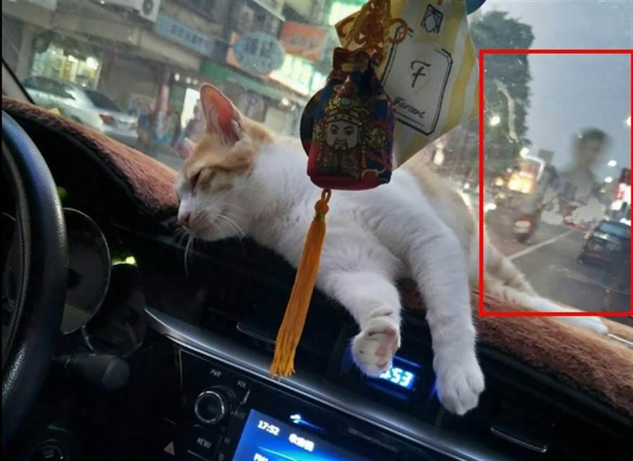 網友分享女友在車上拍自家的愛貓,竟然變成靈異照片。(翻攝自靈異公社)