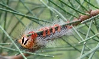 嚴防蟲蟲危機  金門林務所提前噴藥