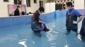 海豚擱淺受重傷經努力救治終於好轉 讓志工感動落淚