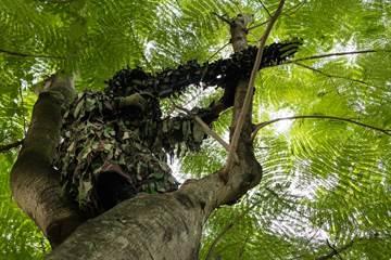明知死路一條 為何二戰日軍狙擊手把自己拴樹上?