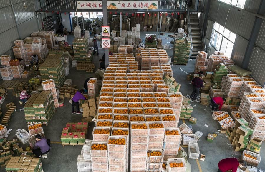 4月1日,湖北省宜昌市秭歸縣的電商企業在做好疫情防控的前提下,工人忙包裝臍橙,全部復工復產。(新華社)