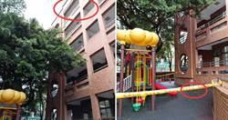 板橋國小童墜樓!球鞋遺留窗台…送醫一度病危 家長痛心爆料