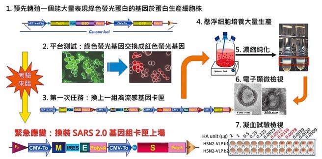 中研院農業生物科技研究中心研究員蕭培文,在17年前的SARS疫情中,投入病毒疫苗研究,並找到抗體。(中研院提供/李侑珊台北傳真)