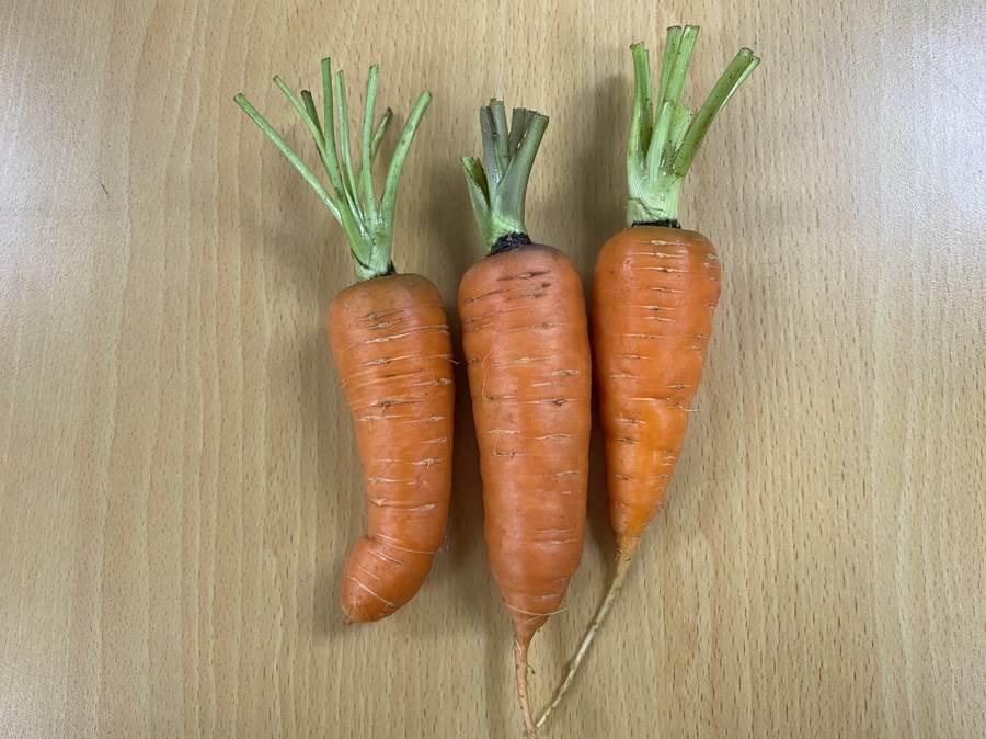 胡蘿蔔為常見的食材,頭頂部(連接葉子處)可回收再種植。(圖取自新北市景觀處官網)