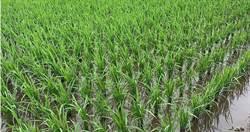 宜蘭蓄水量看不到 農民春耕與民宿搶水
