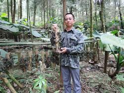 新「林下經濟」文創品!用綠竹種金線連超吸睛