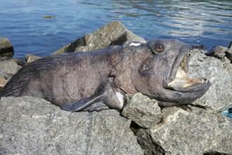 罕見巨嘴魚醜到哭 斷頭照樣咬爆鋁罐