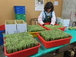 新冠肺炎衝擊農特產品拚內需 台南市行銷將軍綠蘆筍