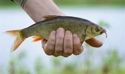 為什麽魚特愛吃蚯蚓?真相很外貌