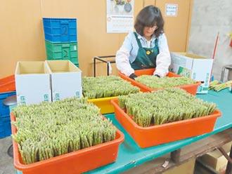 農產受疫擊 南市綠蘆筍拚內銷