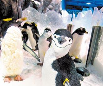 屏東海生館 企鵝展缸重開張