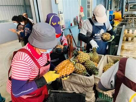 老K報到》韓國瑜推銷高雄農產有成 企業大手筆買鳳梨 - 時事頻道