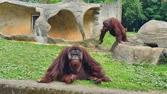 六福村推動物派對 有動物名享門票優惠