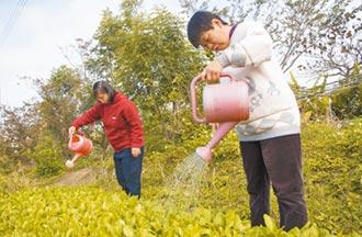 竹市長認購慢飛天使栽種蔬菜