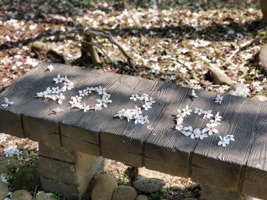 遊客把油桐花排成2020的字形。(周麗蘭攝)
