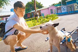 飼主加強防疫 避免傳染犬貓