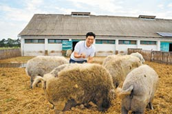綿羊豬肥油 意外圈粉王凱傑