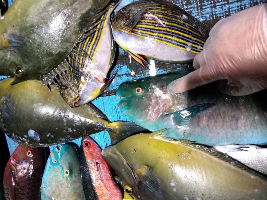 恆春海巡隊10日晚上在白砂近海查獲3名漁民潛水打魚,起出珊瑚礁魚5公斤和潛水裝備,依違反《漁業法》函送法辦。(海巡第八巡防區提供/潘建志屏東傳真)