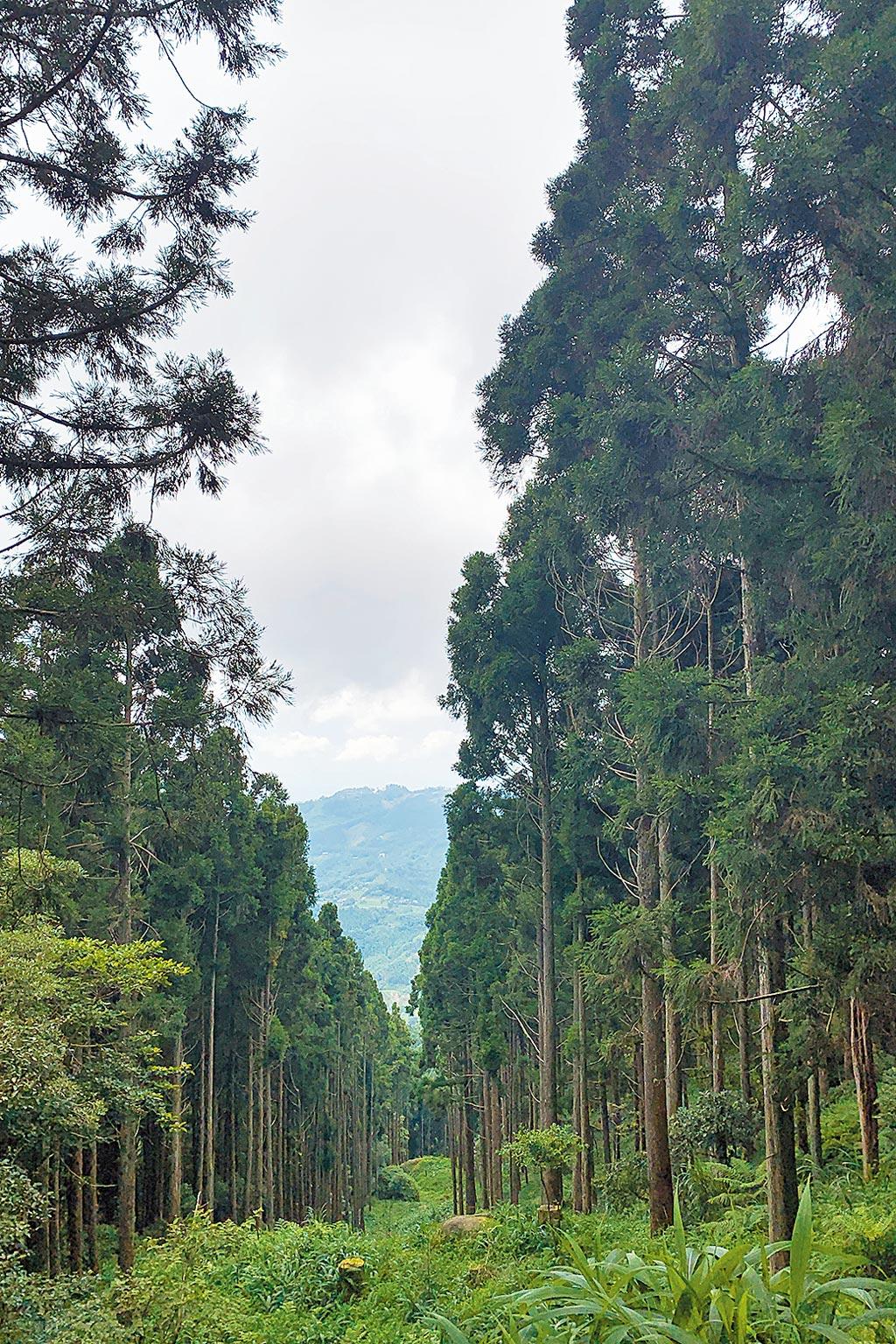 改善環境、淨化空氣,樹木扮演重要的角色。(陳大任攝)